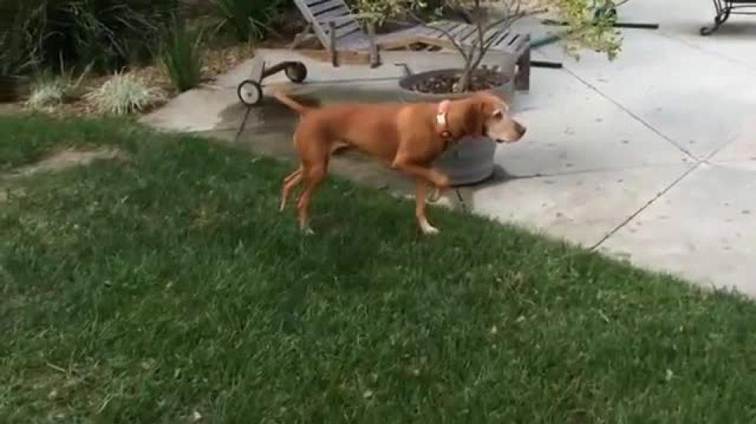 Собака замри