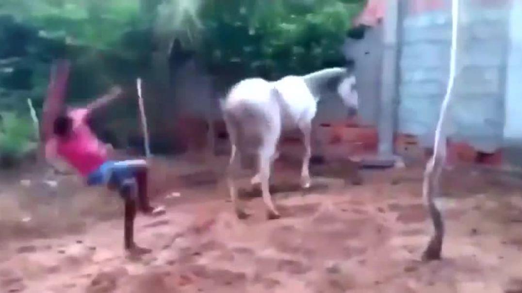Опасная лошадка