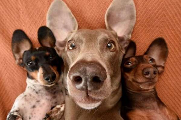 Видео подборка с домашними  животными